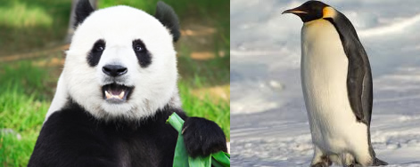 Panda or Penguin Update