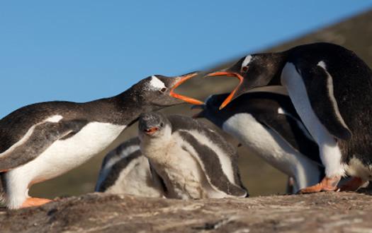 Penguin Update 1.0